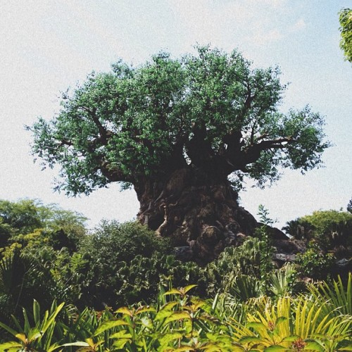 Tree of Life   #vsco #vscocam #disney