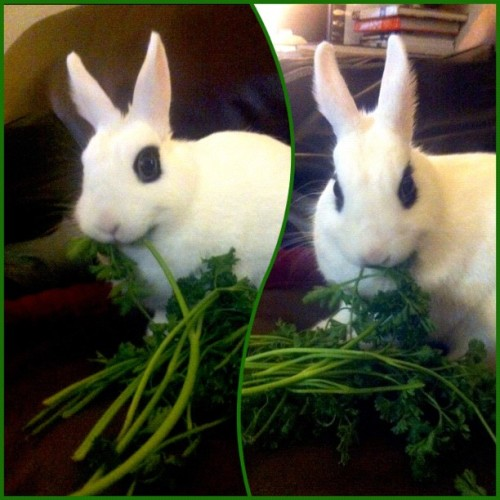 My little parsley muncher.