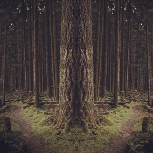 #forest  #mirrorgram