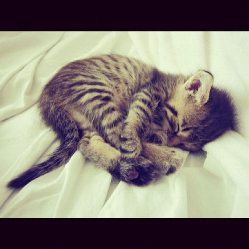 missrachelmae:  Me right meow if I were a #kitten 🐱💤 #solocuddler
