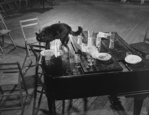 Gjon Mili's cat Blackie steps gingerly among empty glasses left on top of the piano after an all-night jam session at his (Mili's, not the cat's) studio, 1942. Read more: http://life.time.com/culture/photos-of-jazz-legends-duke-ellington-billie-holiday-dizzy-and-more/#ixzz2N51md9CZ