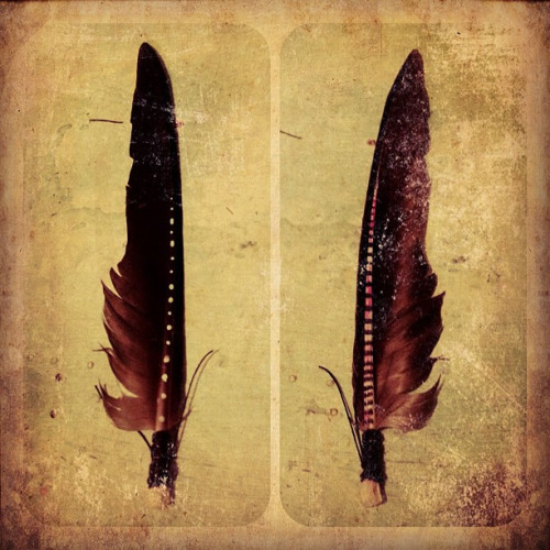 la-vie-bohemienne:  feathers by karen*me-shell on Flickr.