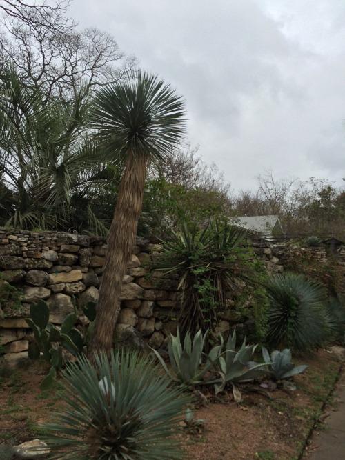 plants hipster cactus cacti hipster decor hipster style nature travel wander wanderer traveller