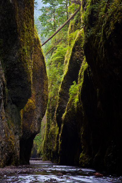 woodendreams:  (by Jordan Ek)