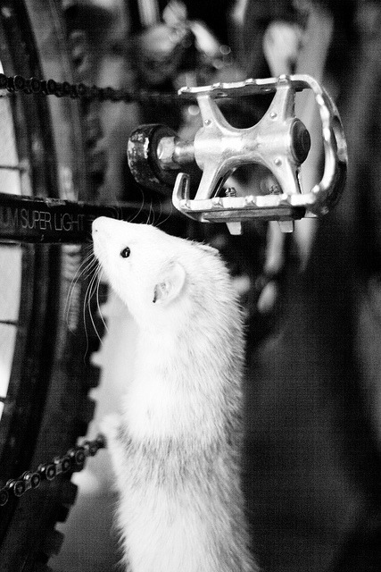 whatareyoudoingferret:  Bike by Yiskaholina on Flickr.What are you doing?