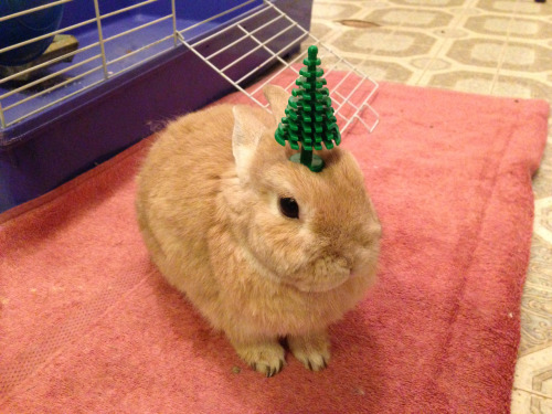 thomyorke-ismydad:  stuffonmyrabbit:  Christmas tree  OMG
