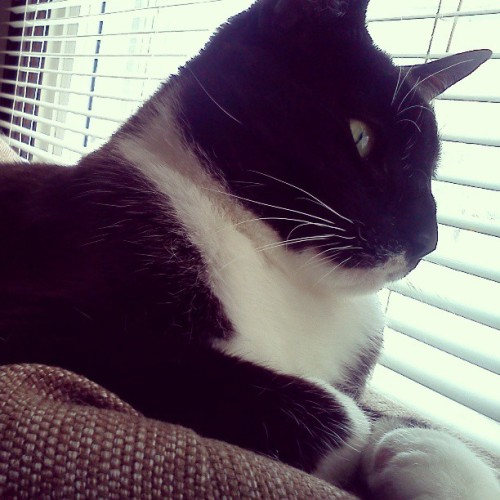 Daydreaming kitty #cat #cute #adorable