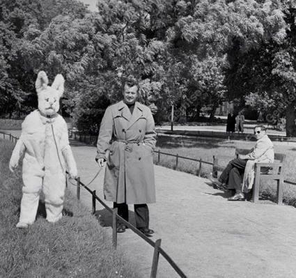 Toon Hermans having a stroll with his white rabbit