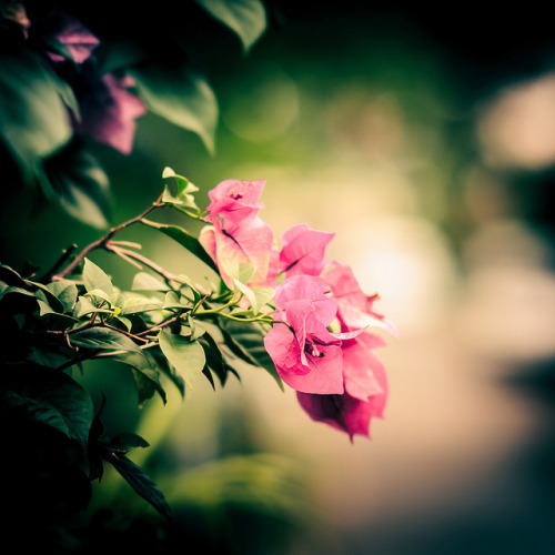002/365 - Flowers by christopherpuchta on Flickr.