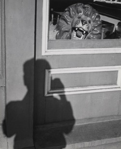 """Lion And Shadow"", 1949  By: ANDRE KERTESZ…."