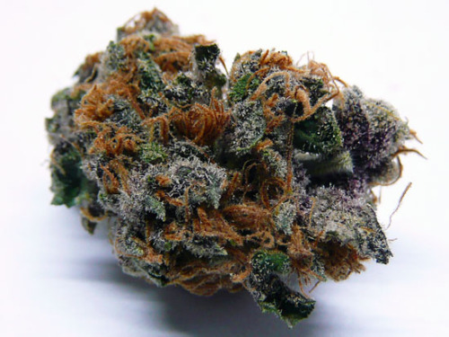 thcfinder:  Delicious Purple Cream Cannabis from THC Finder -http://goo.gl/Q3vS3