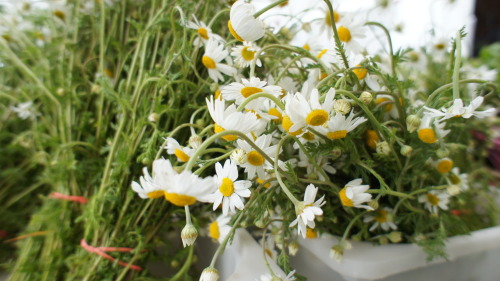 Chamomile is one of my favorite herbs. Sure, you can make tea with it. But I prefer it in a simple syrup, which I can add to cocktails or berries for dessert. Or just a healthy pour in my glass of seltzer. Lani's Farm and Stokes both have it. Mountain Sweet Berry Farm always has beautiful chamomile.