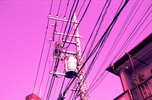 lomographicsociety:  Lomography in Colors - Lavender Rose