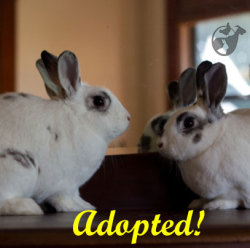 Davey and Fiona the Rescued Rabbits found their forever home this weekend. Best wishes for a great future together, kiddos! A HUGE thank you to the dedicated and compassionate Deborah Claassen for fostering this adorable rabbit duo. Fostering rescued animals is a wonderful way to support Harvest Home Animal Sanctuary.
