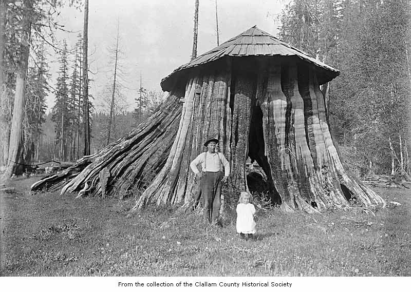 Cedar tree stump hut used as the Post Office in Elwha, Washington. ca 1900