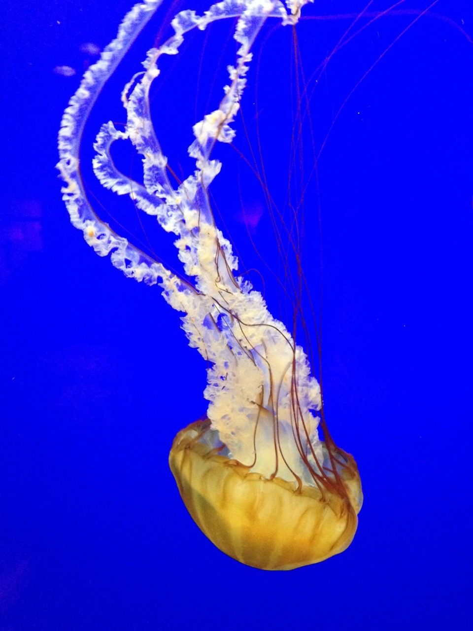 A picture I took of a jelly fish at the aquarium today (: today was such a good day besides almost dying on a boat… (: