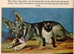oldtimeycats:  From the book Siamese Cats by Louise Van der Meid, 1960. Photographs by the author. Source: Open Library.