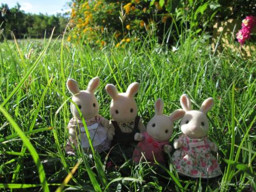 New Blog Post: Travel Bunnies