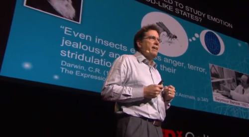"tedx:   Psychiatric disorders — like autism, depression, and schizophrenia — take a terrible toll on human suffering. We know much less about their treatment and the understanding of their basic mechanisms than we do about diseases of the body.Think about it: in 2013 — the second decade of the millennium — if you're concerned about a cancer diagnosis, and you go to your doctor, you get bone scans, biopsies, and blood tests. In 2013, if you're concerned about a depression diagnosis, you go to your doctor and what do you get? A questionnaire.Part of the reason for this is that we have an oversimplified and increasingly outmoded view of the biological basis of psychiatric disorders. We tend to view them — and the popular press aids and abets this view — as 'chemical imbalances' in the brain, as if the brain were some kind of chemical soup full of dopamine, serotonin, and norepinephrine.This view is conditioned by the fact that many of the drugs that are prescribed to treat these disorders, like Prozac, act by globally changing brain chemistry, as if the brain were indeed a bag of chemical soup.But that can't be the answer, because these drugs actually don't work all that well. A lot of people won't take them, or stop taking them, because of their unpleasant side effects. These drugs have so many side effects, because using them to treat a complex psychiatric disorder is a bit like trying to change your engine oil by opening a can and pouring it all over the engine block. Some of it will drip into the right place, but a lot of it will do more harm than good.  —From Dr. David Anderson's TEDxCaltech talk,""Your brain is more than a bag of chemicals,"" a TEDx editor's pick this week.  Something else about psychiatric disorders: I have never heard someone's opinion dismissed with a contemptuous ""Increase your Sorafenib, freak"", even though liver cancer is known to distort mental processes."