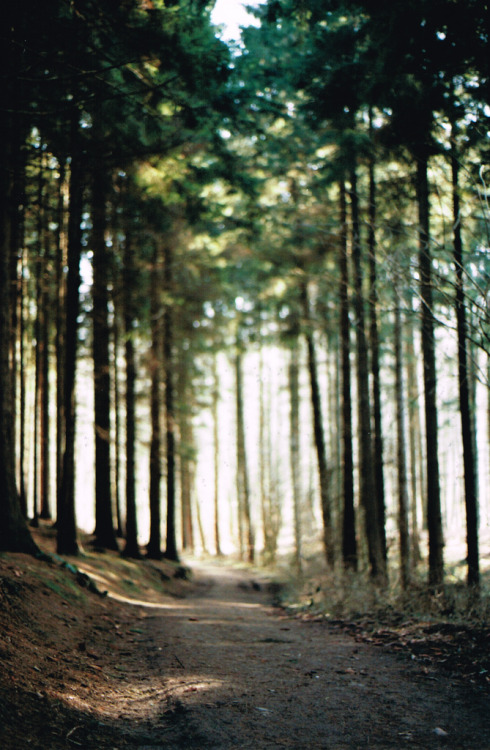 rainydaysandblankets:  Into the Forest (by Luziferian)