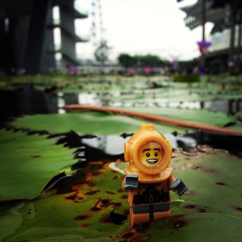 Diving beneath the lillies #lego #diver #singapore