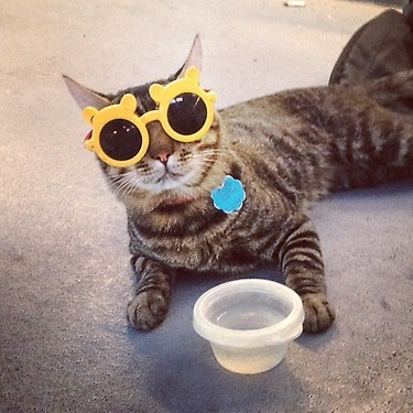 Cats with Glasses ftw!