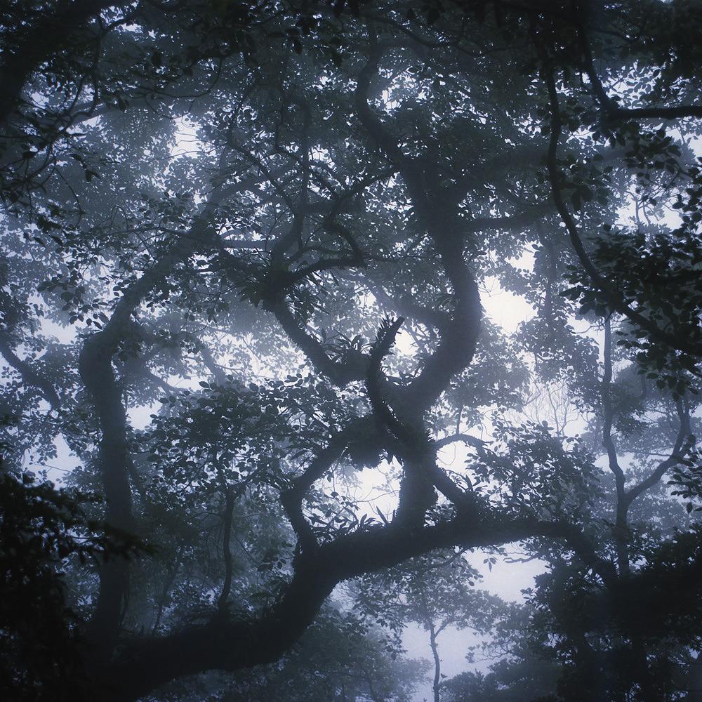 istillshootfilm:  Film Photo By: Kevin Tadge  Mamiya RB67, Kodak Portra 160 Kyoto, Japan. Website, Tumblr