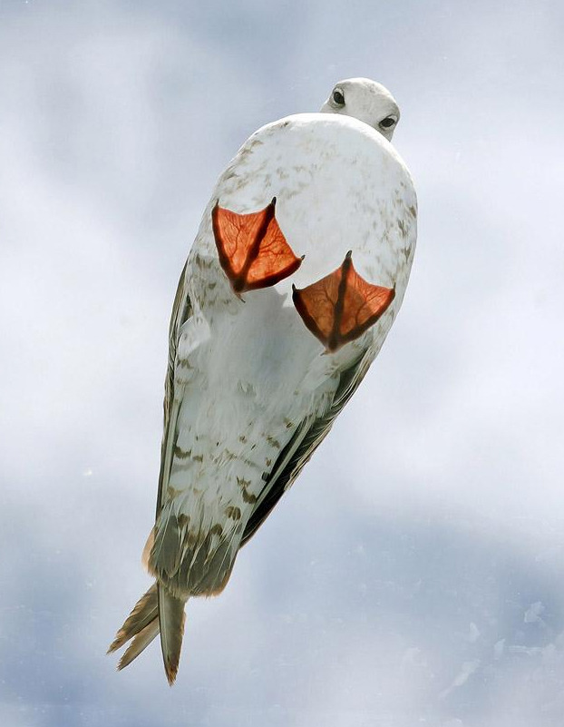 geniusofthehole:  Seagull on a glass roof