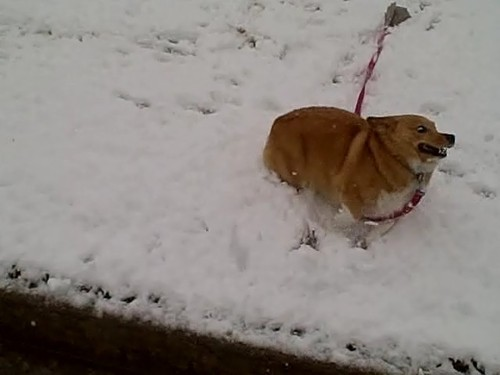 catbountry:  oh fuck how snow get here??/???//