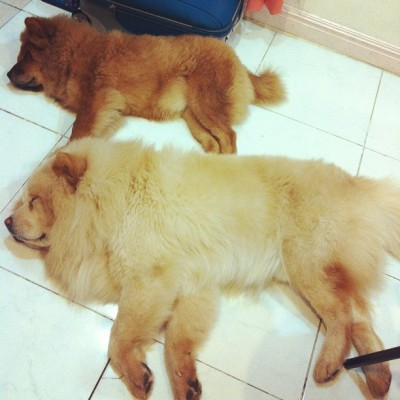 new olympic sport: synchronized sleeping