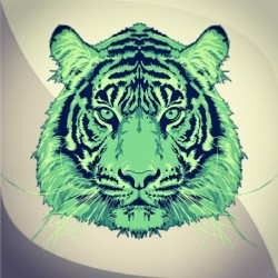 Latest 'Tiger' Illustration