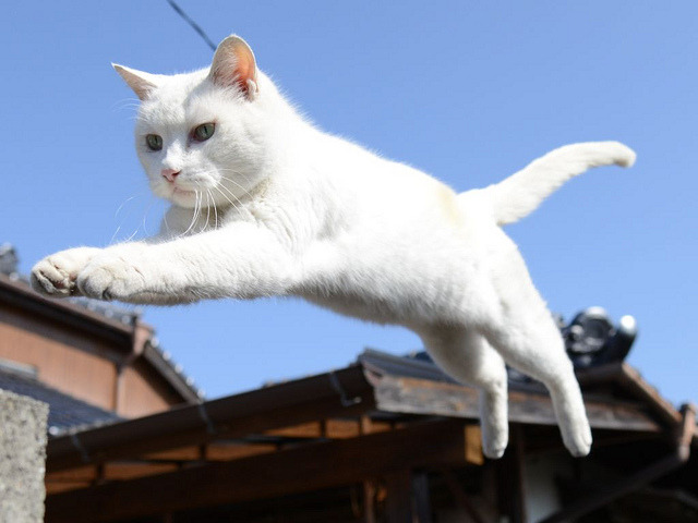 JUMP THEY SAY by nekojimakeibu on Flickr.