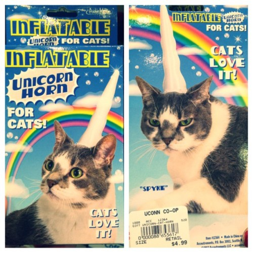 We sell these at the coop #cats #catz #katz