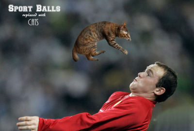 Sports Balls Replaced With CatsGo home Photoshop, you're drunk, but really adorable right now. If you thought this was a cool concept, click on the title to check out more.