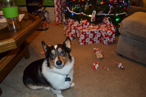kipperthecorgi:  You bring shame on this family.