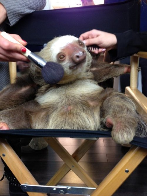 collegehumor:  Sloth is Feelin' Fabulous and Ready for Debut Slow and steady wins the fame and fortune.