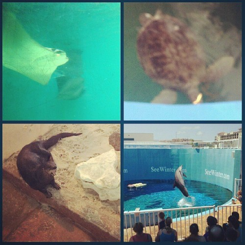 Aquarium! #CMA #clearwater #otters #lovelyday #seaturtles