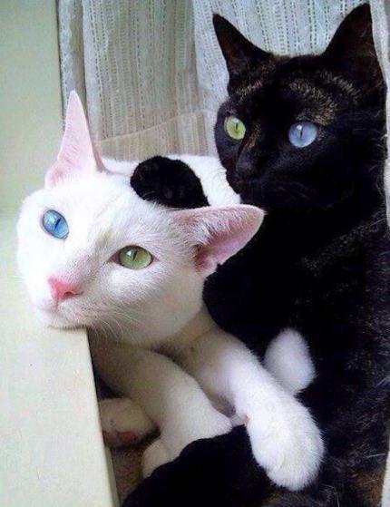 Mutant Siblings More Slibing Pic here: