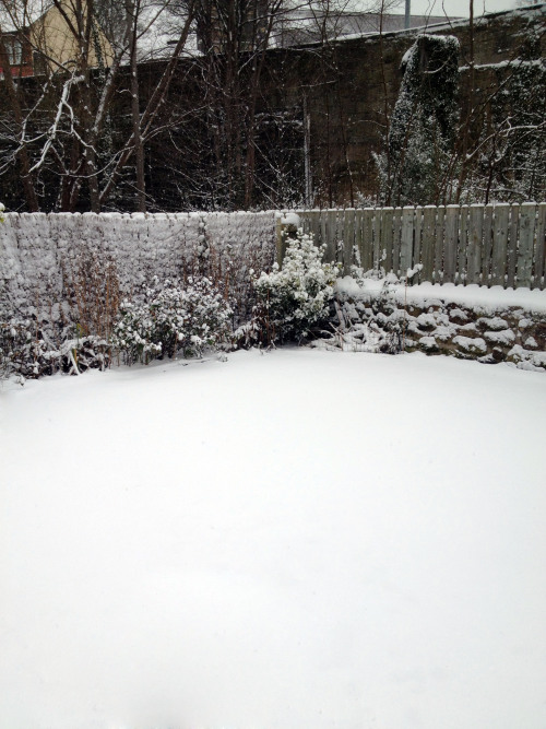 boyslut:  Look how cute this 1/4 of my garden was this morning