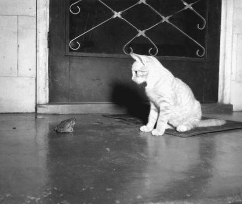 "Red Kerce: ""Mittens"" and Southern toad watching each other, October 23, 1953. Source: State Archives of Florida, via Florida Memory."