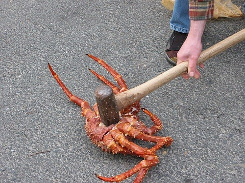 chefboyardiva:  are u feeling it now mr. krabs
