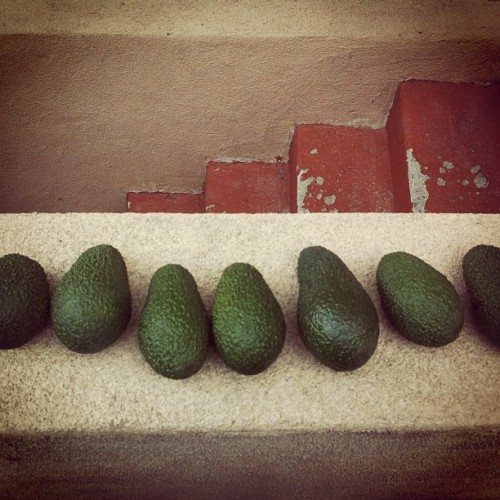 #avocados from our garden.