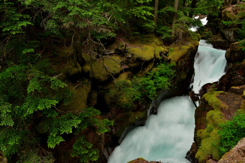 woodendreams:  (by Thomas E. Mitchell)