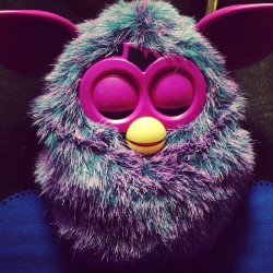 My little furby