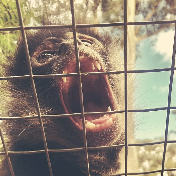 Open wide! #monkey (at Monkey Town)