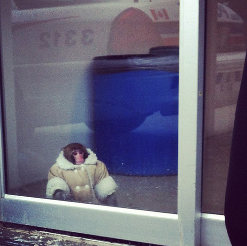 jeskeets:  IKEA Monkey  YOU GUYS. THIS MONKEY IN THIS COAT AT IKEA.