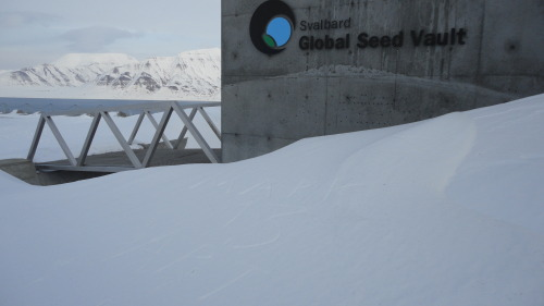 Mark 13 Art 'installation' at the Svalbard seed vault. The writing's in the snow.