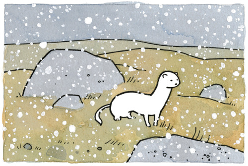 Weasel in snowWatercolor, ink, gouache