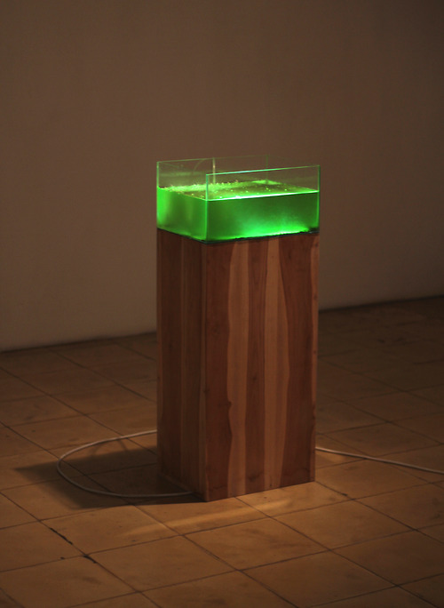 Algae Sweat, 2012, algae, pocari sweat, water, glass, wood, air pump, light