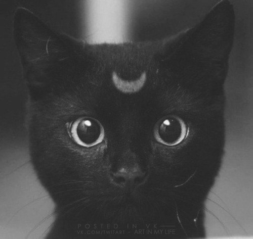 this is so adorable :3  #luna <3 #cat #blackcat